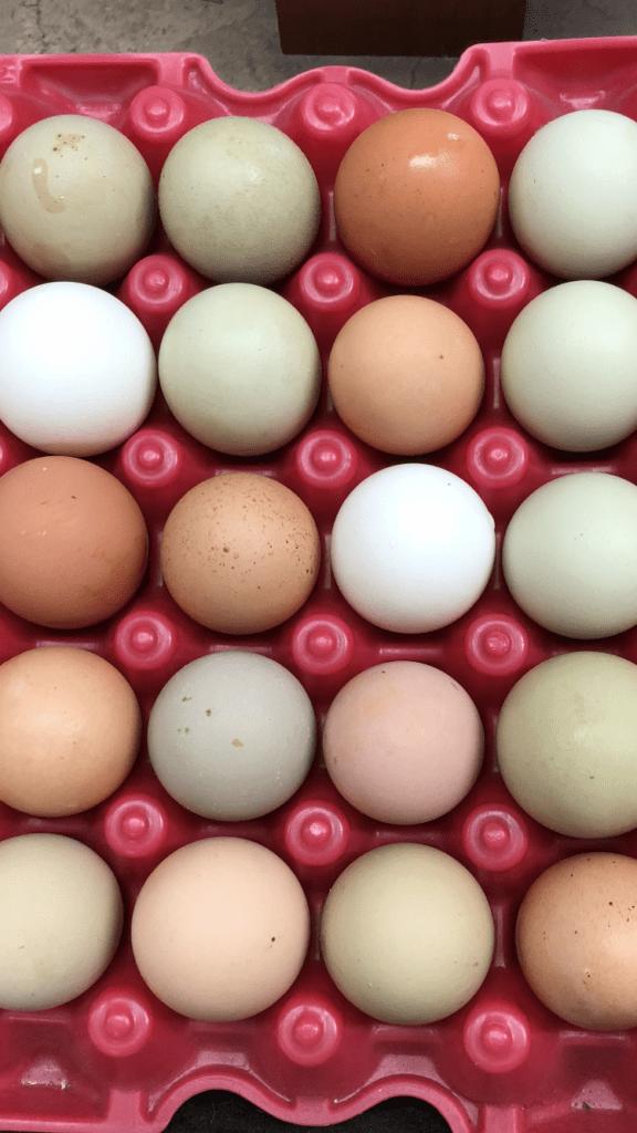 Pasture-raised eggs in a carton