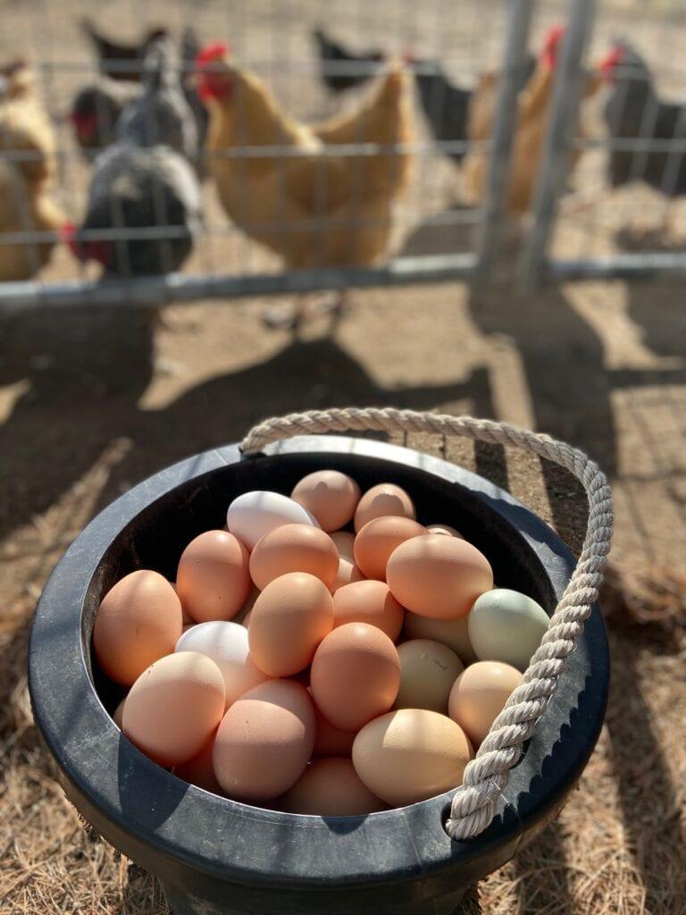 Farm fresh eggs in a bucket