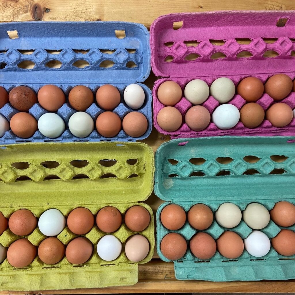 Pasture-raised eggs in cartons