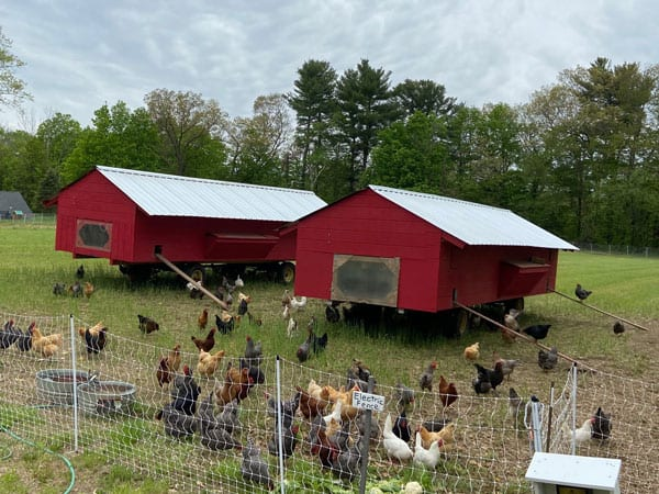 Marshall Farm Concord Ma Firewood Eggs Poultry Honey